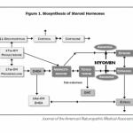 Achieve Healthy Estrogen Balance with Myomin