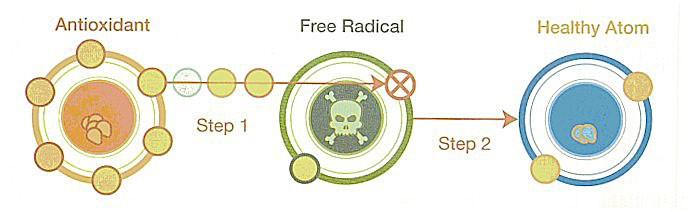 antioxidants freeradicals diagram