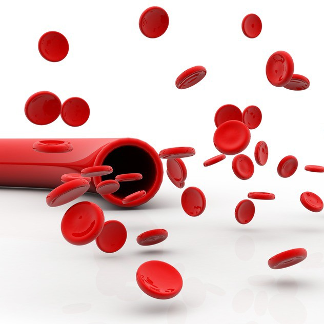 illustration of vein with red blood cells